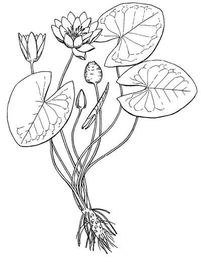 Красная книга растений раскраски